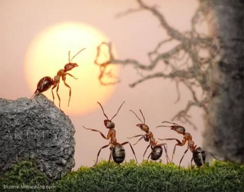 عکاسی از زندگی مورچه ها